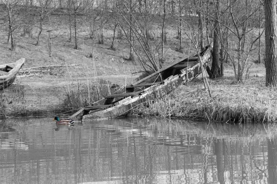 Boot – mit Ente